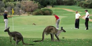 Golfing Holidays in Australia: The Best Places to Go